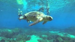 Snorkeling with Turtle in Kas / Turkey by captain ergun