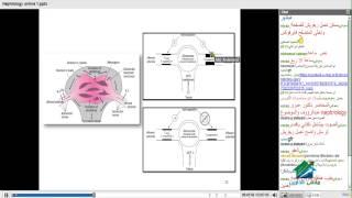 Download Nephrology | أكاديمية الدارين | محاضرة 3 | د.عمرو عبد الروؤف