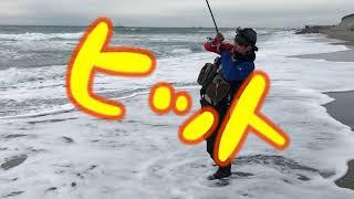 遠州サーフでヒラメ狙っていたらまさかの怪魚出現!!