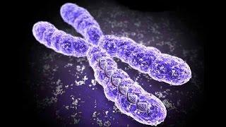 El Cromosoma | ¿Qué es? | Estructura | Biologia | BIEN EXPLICADO |