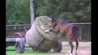 Нарезка приколов с лошадьми, Horses Ponies and Fails Compilation