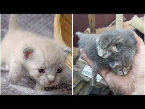 Dumpster helpless kittens rescued by hearted man and the are become good now!