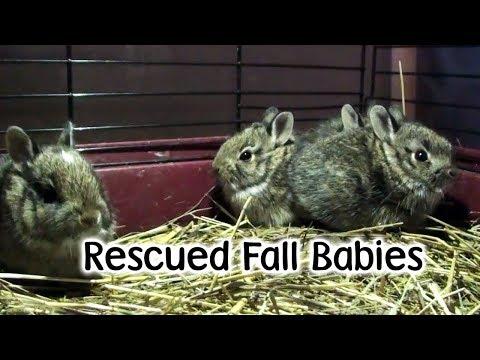 Fall Babies on the Farm