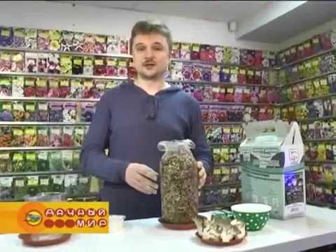 Грибоводство в Самарской области – цены, фото, отзывы