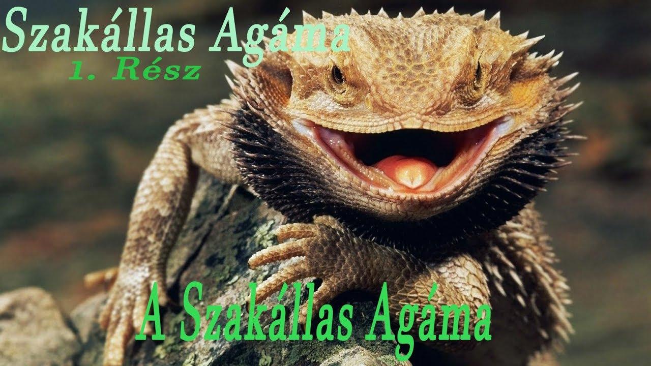 Típusú paraziták szakállas sárkányokban. Recent Posts
