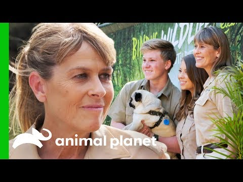 Terri Irwin Carries on Her Late Husband Steve Irwin's Legacy