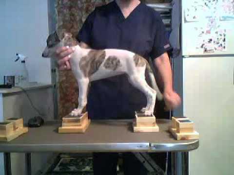 Whippet Pup 6 Using Neat Feet Stacking Blocks Youtube