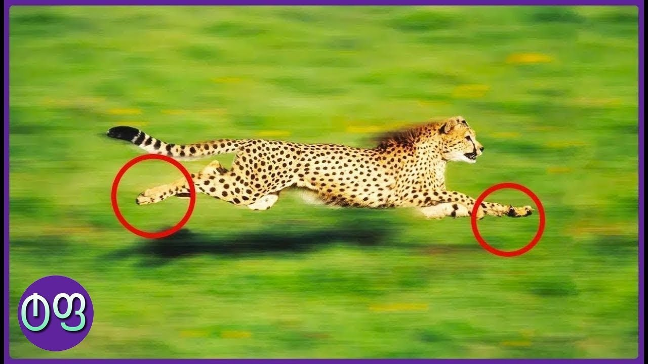 ყველაზე სწრაფი ცხოველები მსოფლიოში ★ ტოპ ფაქტები ★
