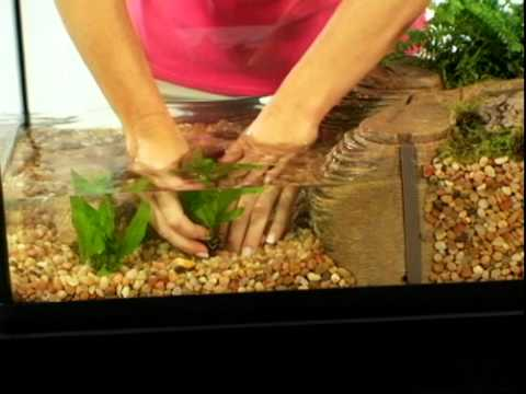 Can Aquatic Turtles Be Out Of Water : TetraCare for Semi-Aquatic Turtle Environments - YouTube