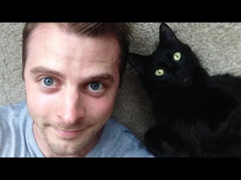 How Cats Show Their Love To Their Owners