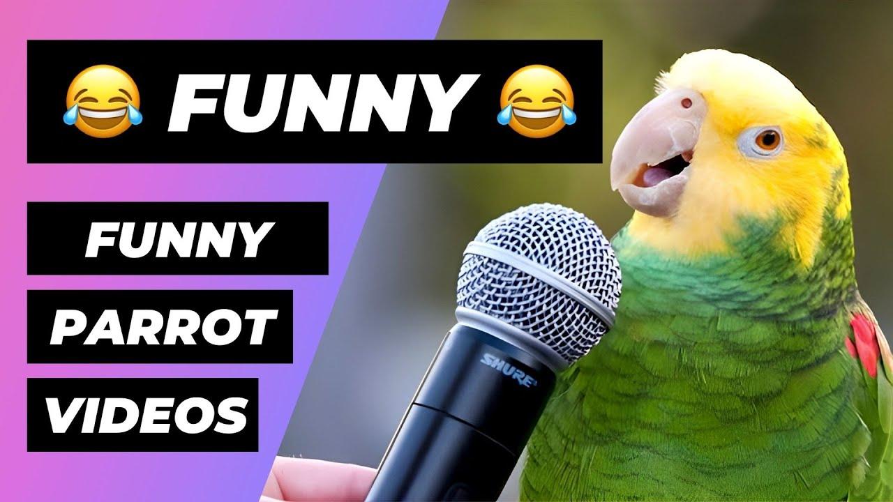 Funny Parrots ???? Cute and Funny Parrot Videos Compilation (2018) Loros Adorables Recopilación