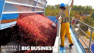 How 100 Billion Cranberries Are Harvested In 6 Weeks | Big Business