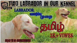 labrador dog in tamil,history ,labrador retriver information in tamil training for labrador in tamil