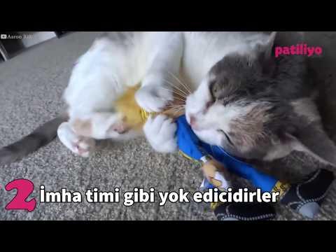 Sadece Kediyle Yaşayanların Anlayabileceği 12 Durum