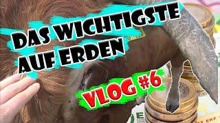Vlog#6 Das WERTVOLLSTE auf der WELT | Mein Anliegen an euch