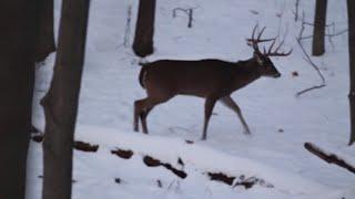 Deer Hunting in Indiana 2014