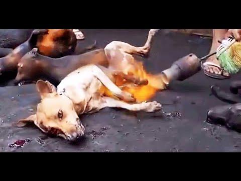Dog meat industry in Korea