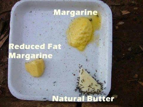 DO ANTS PREFER BUTTER OVER MARGARINE? - YouTube