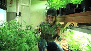 Grow Cannabis – Overgrow! – by Jorge Cervantes