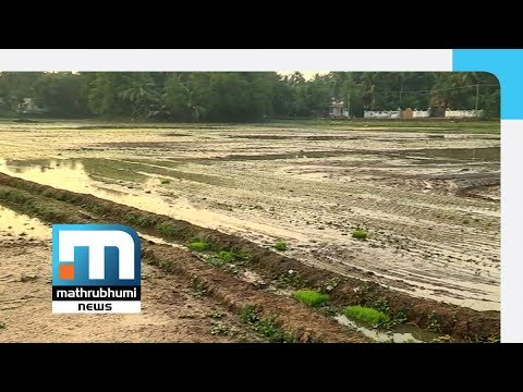 Organic Paddy Farming Using Indigenous Varieties At Niranam | Mathrubhumi News
