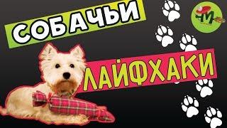 8 лайфхаков для собак та їх власників