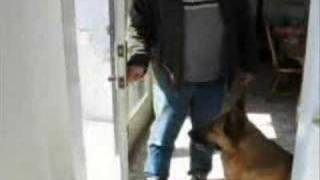 Dog Training - How To Teach Your Dog To Wait At The Door