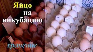 Хранение инкубационного яйца // Storage of hatching eggs