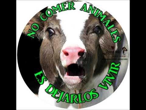 NO COMER ANIMALES ES DEJARLOS VIVIR! Go Vegan!!