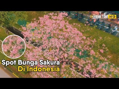 gak-harus-ke-jepang,-ini-5-spot-wisata-bunga-sakura-di-indonesia