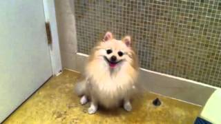 Cute Dog Music Lesson (funny!)