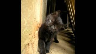 黒猫だらけの画像集です。
