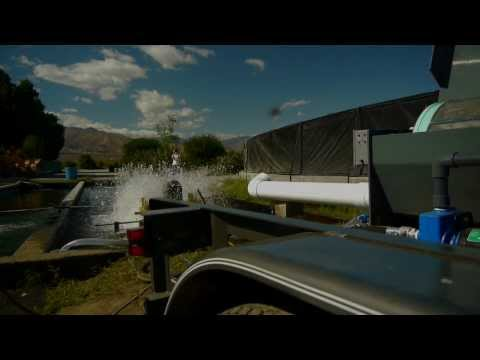 EWS Aqua Q60: Ammonia Removal and Water Disinfection in a Single Step