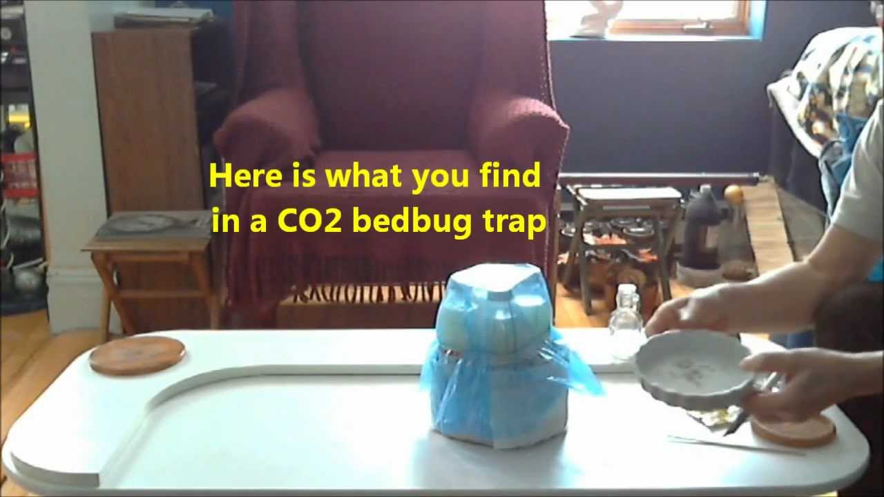 Amazing CO2 Bedbug Trap   Making CO2   YouTube