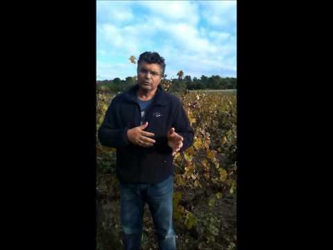 Valagro program wine grape AOC Côtes du Rhône Village France