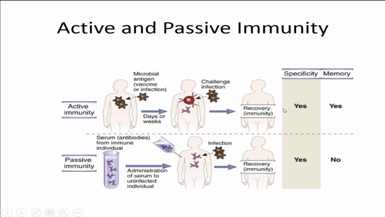 active immunity What is the difference between active immunity and passive immunity both are short lived, but active immunity helps protects right away passive immunity results when a person is given someone else's antibodies, whereas active immunity results when a person's immune system works to produce antibodies and activate other immune.