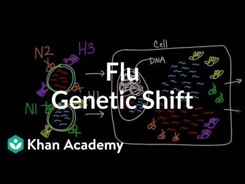 Genetic shift in flu | Infectious diseases | Health & Medicine | Khan Academy