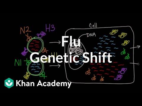 Genetic Shift In Flu | Infectious Diseases | Health & Medicine | Khan Academy