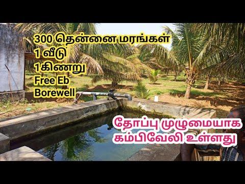 18 லட்சத்திற்கு வீடு, கிணறு, Free Eb என காய்ப்பு தரக்கூடிய தென்னை மரங்களுடன் தோப்பு விற்பனைக்கு| GK