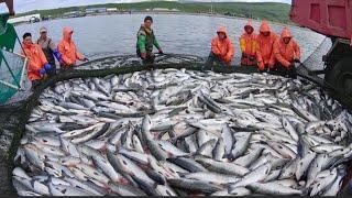 Разновидности Рыболовных Сетей Одностенные Столблённые Рамные Ряжёвые