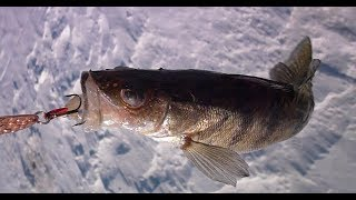 Январь, берши, мороз и ветер! Volga ice fishing
