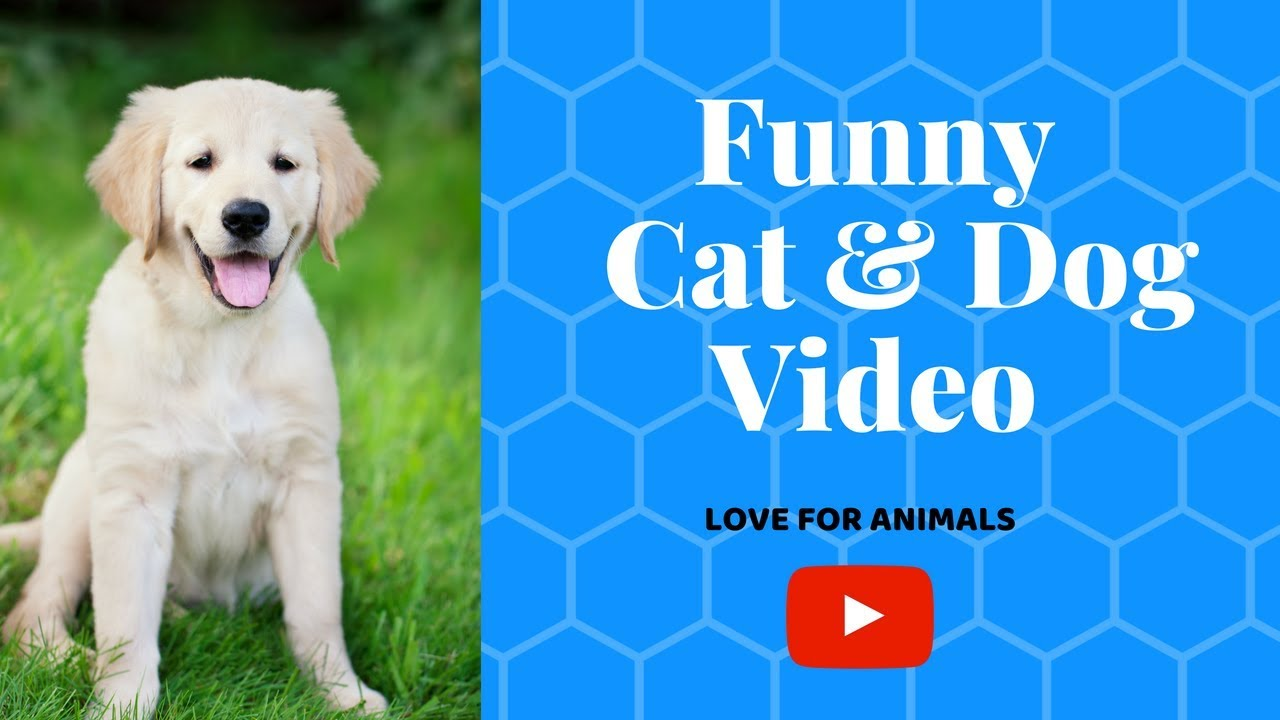 Funny Grumpy Dog Video 2018 Puppy Dogs Funny Videos P4 Pet News