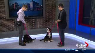Global News Halifax Dog Talk Feb 12 With Tristan Flynn
