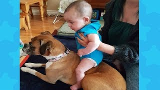 Baby Riding Dog - Funny baby and dog Compilation