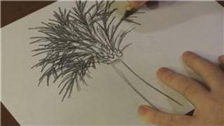 Nature Drawings : How to Draw a Palmetto Tree
