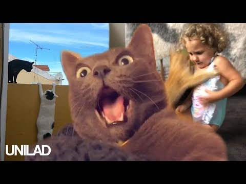 Cats Are Everywhere - Funny Cat Compilation | UNILAD