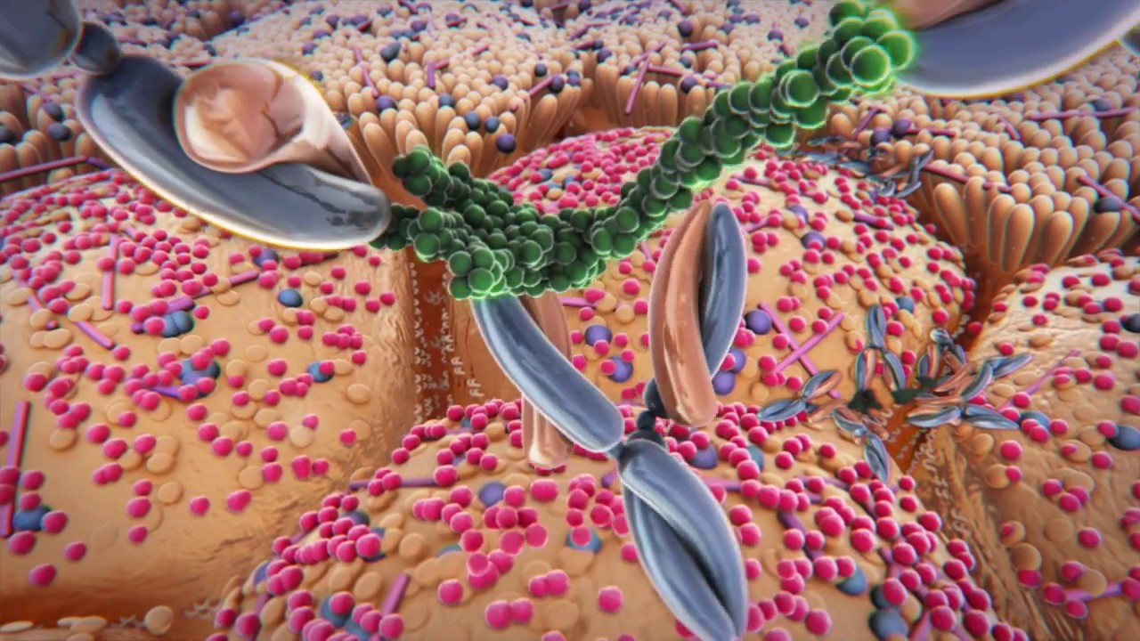 EnteraGam Enteropathy