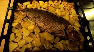 Сазан запечённый с картофелем в духовке