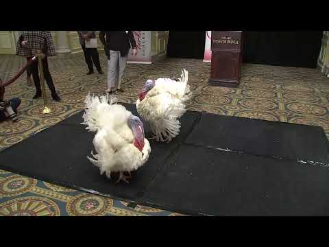 LIVE: Turkeys to be pardoned by Trump are introduced