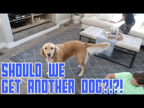 SHOULD WE GET ANOTHER PUPPY? | WE NEED YOUR HELP