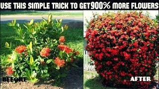 Do This And Get 900% More Flowers On Your Plants/100% Success